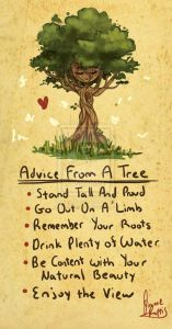 advice-from-a-tree